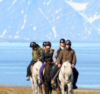 SvalbardHorses03